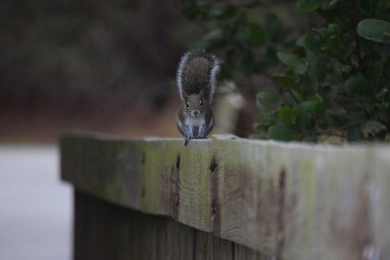 #florida #floridaflowers #floridafungus #floridawildlife #Squirrel Florida Life Fungus 🍄 Squirrels