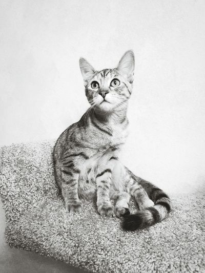Kitten Sitting On Sofa Against Wall