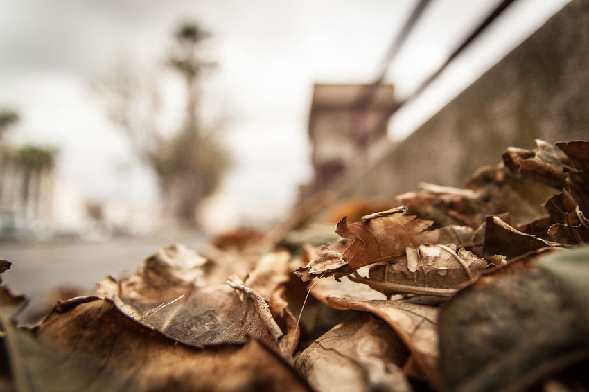 alghero sardegna sardinia Autumn Autumn Collection Autumn Colors Autumn Leaves Autumn🍁🍁🍁 Avenue Close-up Harbor View Leaves Leaves🌿 Meadow Nature Nature Photography No People Outdoors Point Of View Selective Focus Selective Focusing Street Streetphotography View From Above Wall