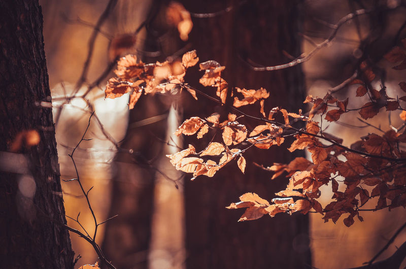 EyeEm Nature Lover EyeEm Selects EyeEmNewHere Poland Autumn Beauty In Nature Branch Day Dry Focus On Foreground Forest Fragility Growth Kaszuby Land Leaf Nature No People Outdoors Plant Poland Eyeem Selective Focus Spring Springtime Tree