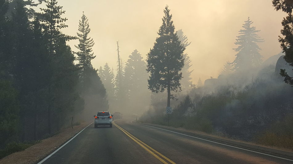 Fog Bushfire Sequoia Sequoia National Park Road Asphalt EyeEm Selects Car Torrential Rain Weather Social Issues Wet Road Storm Tree Extreme Weather No People USA Fire Rural Scene Water Winter Outdoors Thunderstorm Day
