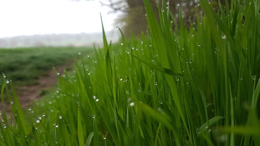 feel the freshness Nofilter Samsungphotography Waterdrops Waterdroplets Grass Grassland Focus On Details Nature Beauty In Nature Nature Photography Naturelovers Springintospring Perfect Moment Freshness Simple And Pure Nature. Simple EyeEm EyeEm Best Shots View Rural Scene Water Agriculture Backgrounds Field Blade Of Grass Rainy Season Rain Cultivated Land RainDrop Drop