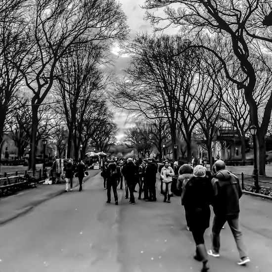 Central Park New York City..... LGarciaPhotography Olloclip IPhone IPhoneography Iphoneonly Iphonephotography Bare Tree Large Group Of People Walking Tree Street Men Person City Lifestyles Road City Life Full Length Sky City Street Outdoors Day Crowd The Way Forward Monochrome