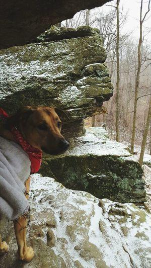 Adventure Buddies Hikingadventures Ledges Brady My Pup Nature Hike