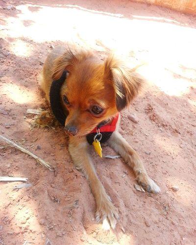 Portrait of dog sitting on beach