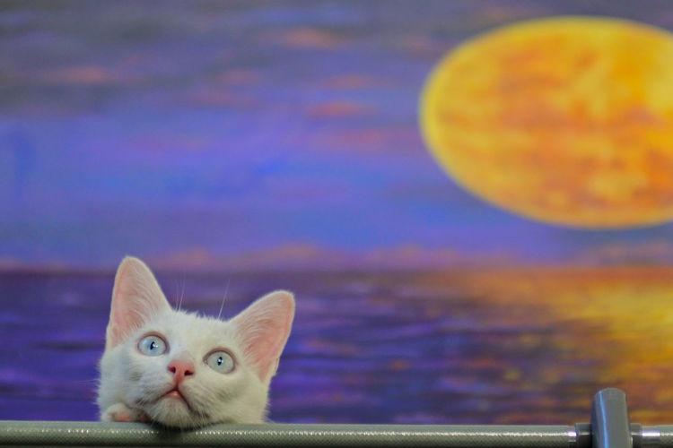 Close-up portrait of cat against blue sky