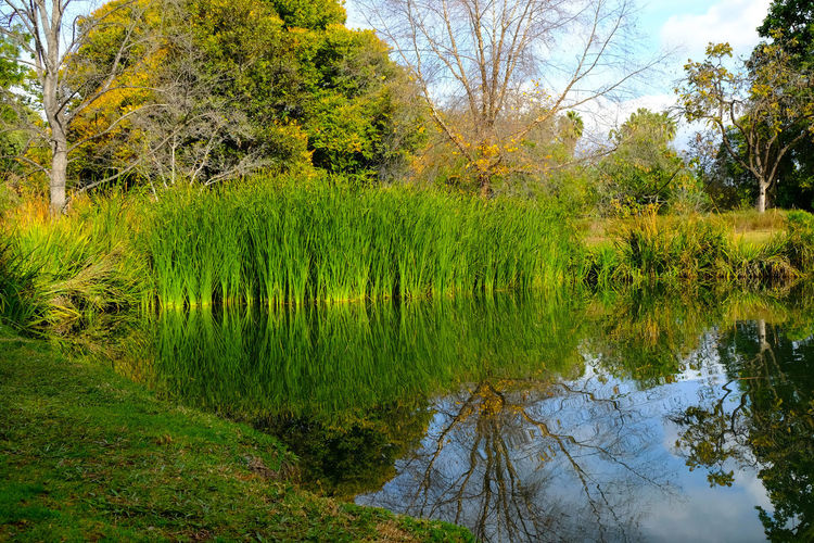 California Winter Colours Tree Green Color Growth Reflection Nature No People Sky Yellow Beauty In Nature Outdoors Day Grass Water Willow Tree Light And Shadow Reflection_collection Lowkeyphotography Fujifilm_xseries Straightfromcamera Beauty In Nature Backgrounds Available Light Sunlight Blue Sky And Clouds Retro