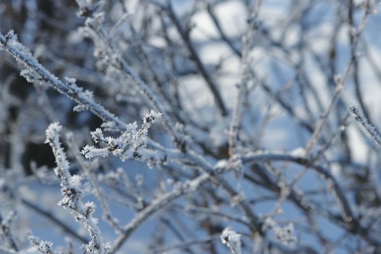 Close-Up Of Snow On Tree Branch