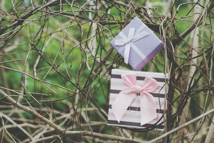 No People Celebration Gift Box - Container Close-up Outdoors Tree Day Present Outdoor Christmastime Garden Background Box Advertising Marketing Serene Outdoors Backdrop Vintage Decoration Beauty In Ordinary Things Surprise Celebration AnniversaryGift Birthday