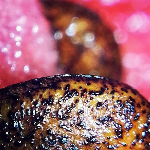 Арбуз , косточка , макросъемка , лето , watermelon, bone, macro, summer, хъэрбыз, къапраз, гъэмахуэ, кумылэ