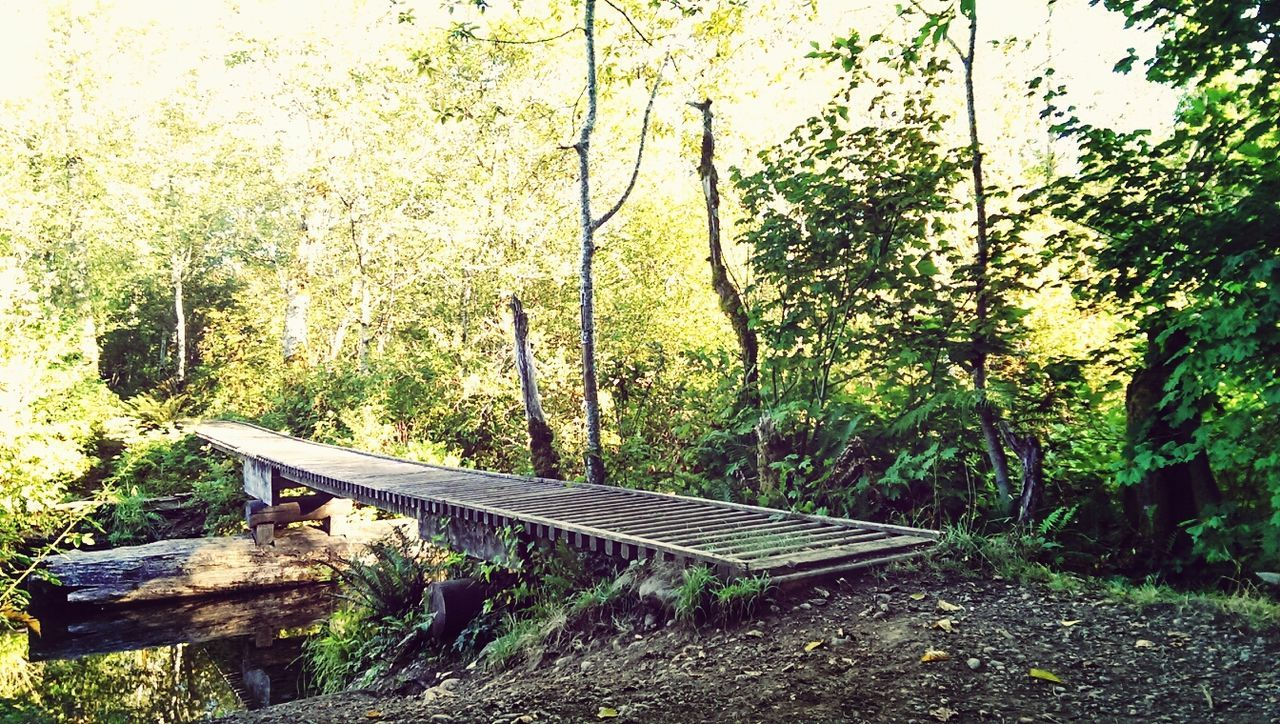 tree, railroad track, day, transportation, rail transportation, no people, tranquility, nature, growth, outdoors, beauty in nature