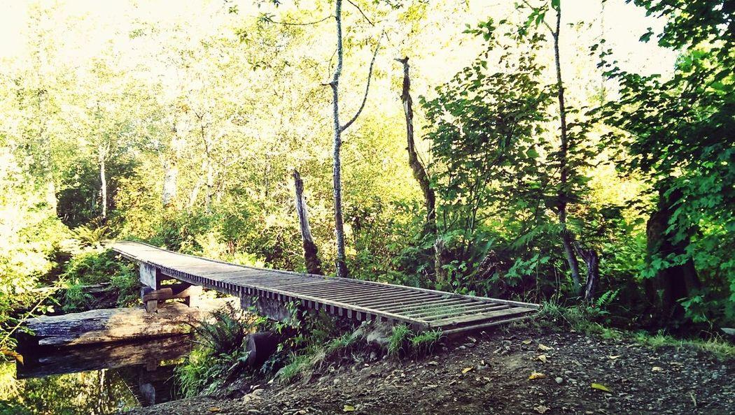 Mountain Biking Enchanted  Trail HDR