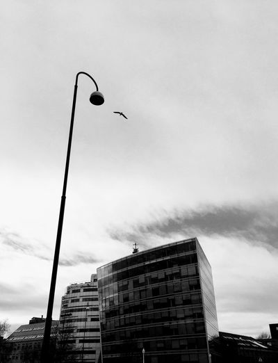 'Flying High' Sky Building Exterior Street Light Low Angle View Built Structure City Architecture Bird Photography Flying No People Outdoors Cloud - Sky Day Bird Animal Themes Street Lamp Streetphotography Urbex Eyeem Highway Oslo 2017 KariJosefiné✨