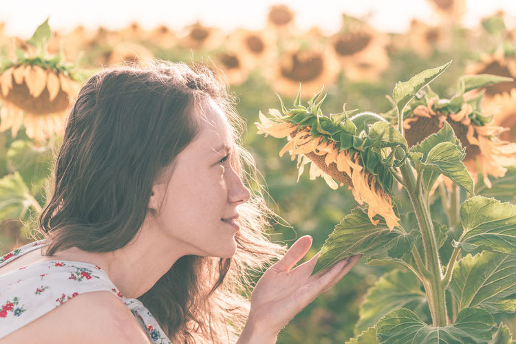 Woman looking at sunflower plants