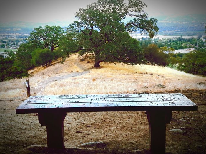 Tree Bench Empty Tranquility Tranquil Scene Wood - Material Wooden Landscape Mountain Non-urban Scene Scenics Day Plant Nature Countryside Mountain Range Outdoors Growth Park Bench Beauty In Nature