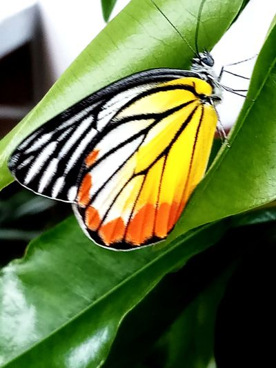 Flower Spread Wings Perching Multi Colored Leaf Butterfly - Insect Animal Markings Insect Butterfly Animal Wing