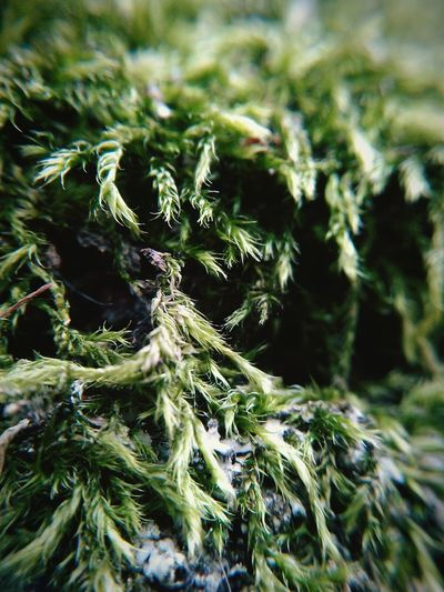 Moss Green Background Green Color Green Nature Green Grass Green Plant Macro Macro Nature Macro Plants Close-up Close Up Nature Flora Greenery Plant Close Up Flora Close Up Plant Background Nature Backgrounds Soft Backgrounds Natural Pattern Natur Nature Textures Nature Is Art Nature Natura