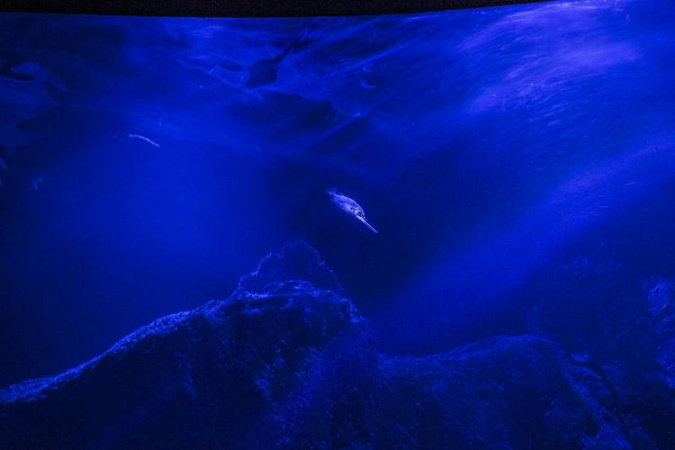 school of fish in captivity swimming in the aquarium Underwater Sea Animals In The Wild Animal Wildlife Animal Themes Water UnderSea Swimming Sea Life Animal Blue Marine Vertebrate Nature Fish Rock Group Of Animals Invertebrate No People