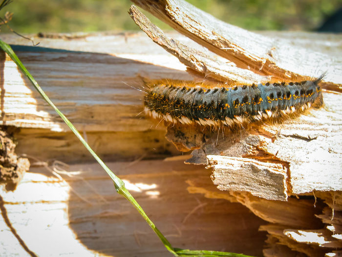Close-up of caterpillar on broken wood