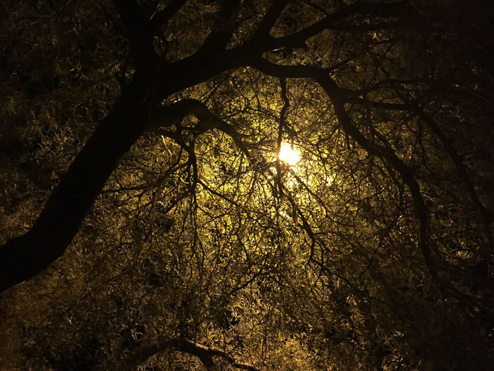There was this light ... Intriguing Tree Tree Branches Backlighting Dark Light Far Away Light Golden Light Mysterious Tree Ominous Tree Unknown Light