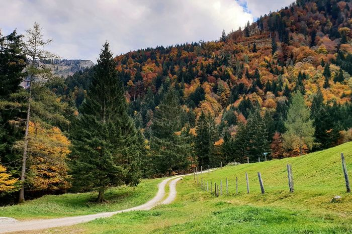 Autumn coloured mountains and Path, next to Gruber Alm area ... Mountainious Background Mountain Autumn autumn mood Winding Path Winding Tree Autumn colors Autumn Colours Travel Destinations Travel Postcard Wanderlust Tourist Destination Tourism Tree Agriculture Rural Scene Pine Tree Pinaceae Sky Green Color Landscape Lush - Description Cultivated Land Agricultural Field Winding Road Woods Lush Foliage Growing