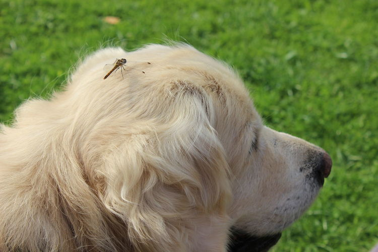 Animal Hair Animal Themes Close-up Day Dog Domestic Animals Grass Mammal Nature No People One Animal Outdoors Pets