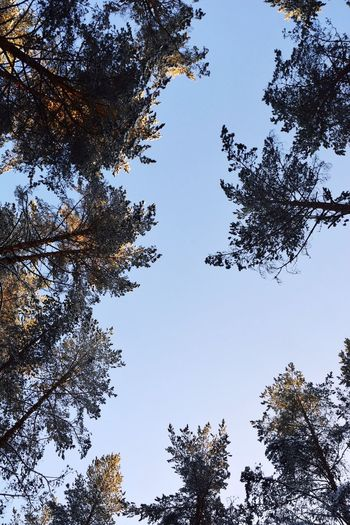Tree Nature Pinaceae Sky Forest Animal Wildlife Animals In The Wild Outdoors No People Day Beauty In Nature Animal Themes