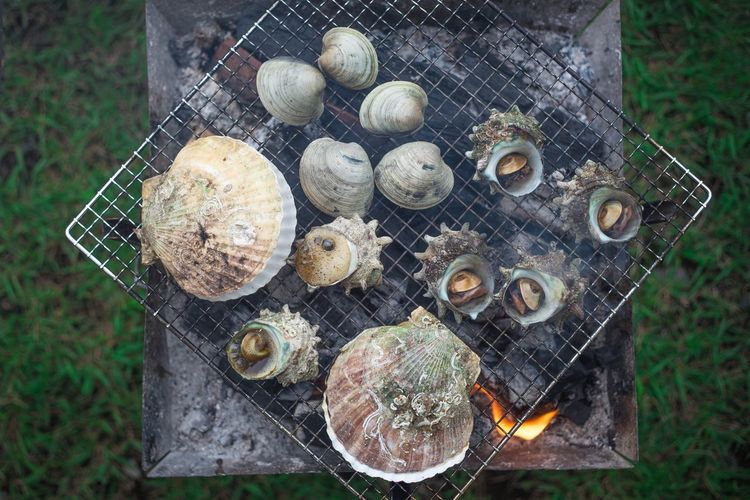 Now this is what I call camp food... only in Japan Camp Food Japanese Food SHELLFISH  Seafoods High Angle View Directly Above Nature Day No People Outdoors Plant Grass