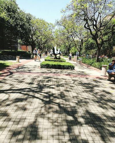 Tree Outdoors Day Sky Nature People Studentlife  Students Life Freshness Pretty♡ Growth Pretoria University Tuksofniks Tuks
