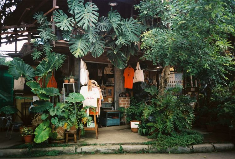 Potted plants against trees and building