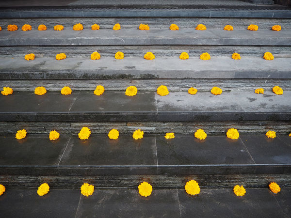 🌼💛🌼 Travel Ubud Bali Bali, Indonesia Beauty In Nature Day Exceptional Photographs Flower Fragility Freshness High Angle View Marigold Nature No People Outdoors Stair Tadaa Community Travel Destinations Ubud, Bali Yellow Flower Multi Colored Close-up Arrangement Petal Adapted To The City