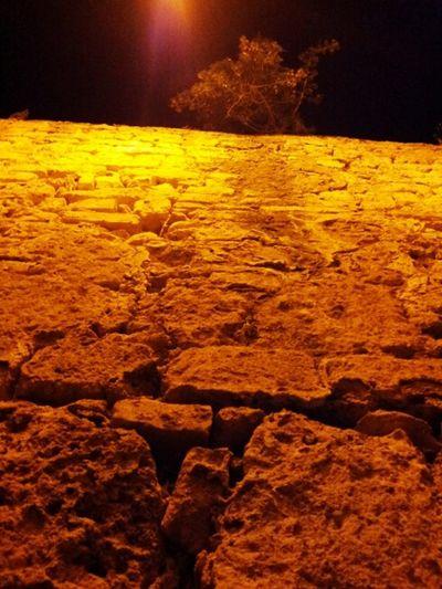 Rocks Rock Wall Old Rock Wall One Tree Alone Tree Of Life