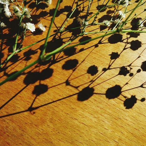 Creative Light And Shadow Babysbreath Shadow Flower Flowerporn EyeEm Flower Flower Collection