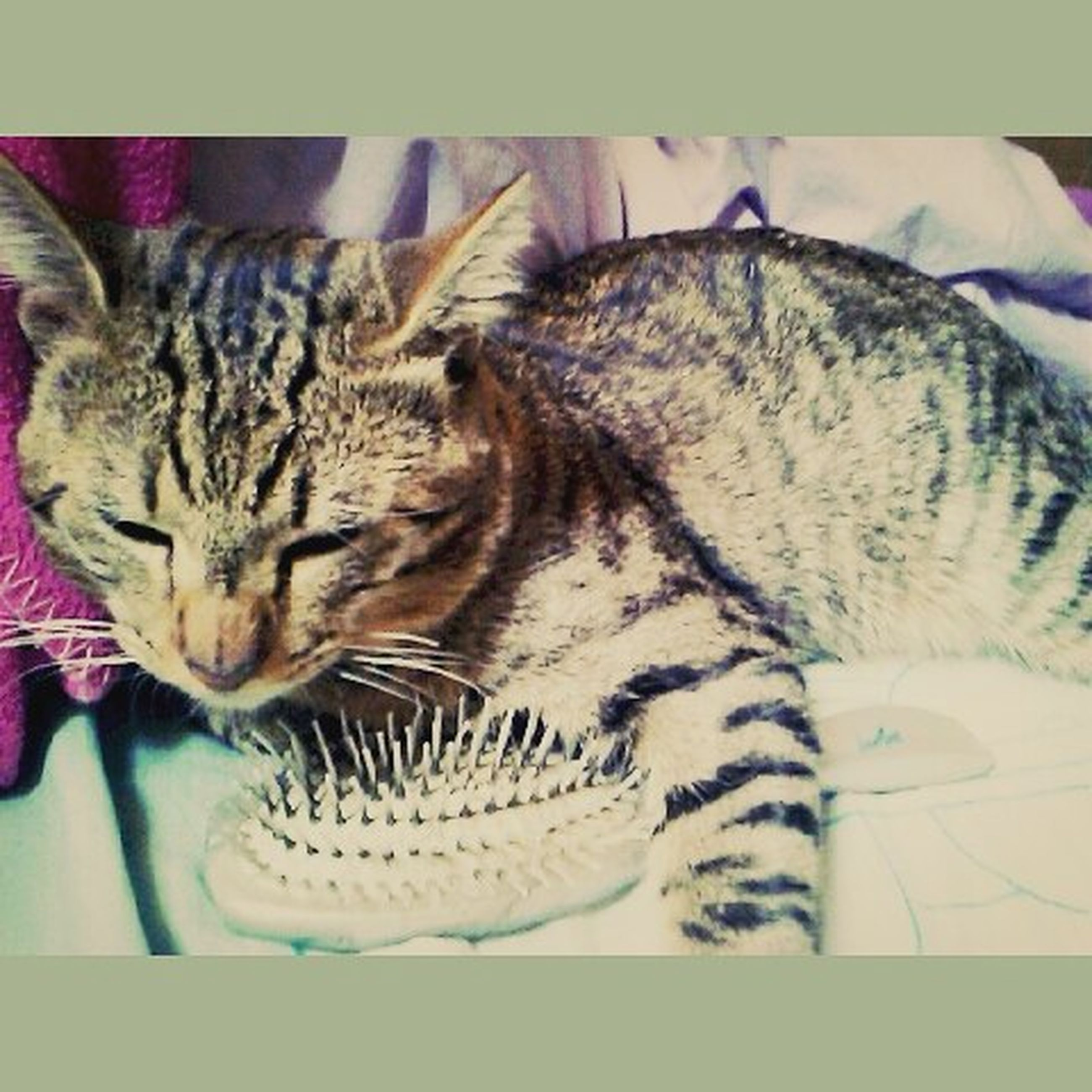 animal themes, pets, indoors, domestic animals, domestic cat, one animal, mammal, cat, sleeping, relaxation, feline, resting, lying down, bed, eyes closed, home interior, whisker, comfortable, high angle view, sofa