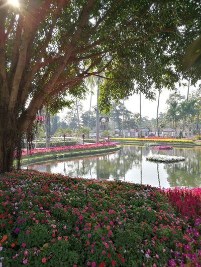 Public Places Public Park Beautiful Tree Flower Water Sky Plant Flower Head Botanical Garden Relaxed Moments Relaxing Moments EyeEmNewHere The Traveler - 2018 EyeEm Awards