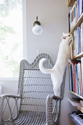 View of a cat with open book