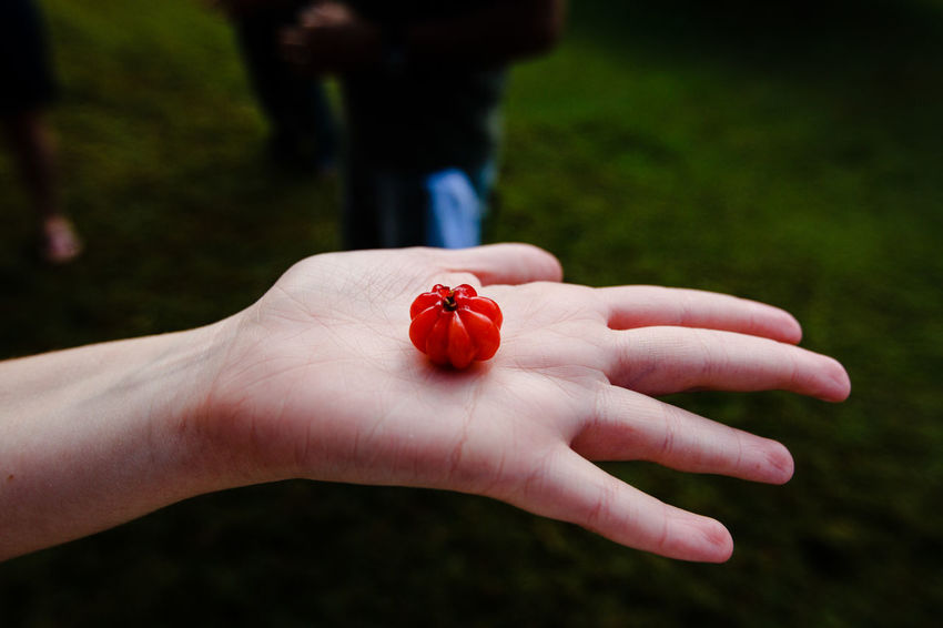 Berry Hand Close-up Day Fingernail Focus On Foreground Freshness Human Body Part Human Hand One Person One Woman Only Only Women Outdoors People Red Women