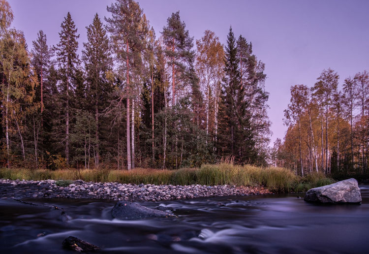 Trees growing by river in forest against sky