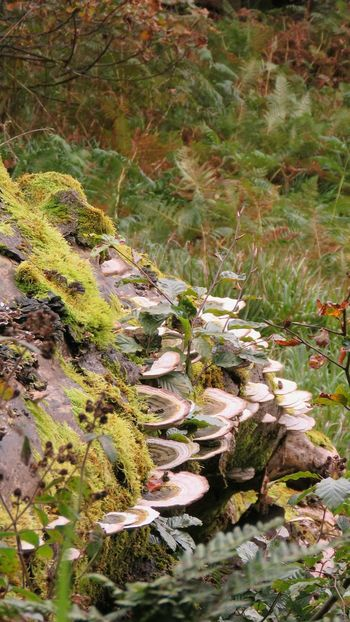 Nature Tranquility No People Day Growth Outdoors Beauty In Nature Water Green Color Lake Tree Fragility Close-up WoodLand National Trust Multi Colored Fungi On A Log Fungus 🍄 Tree Trunk Change Moss Autumn Colors Hills And Valleys Lush - Description Freshness