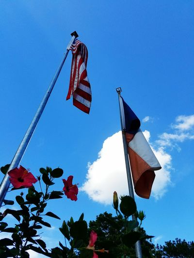 Feel The Journey Flags Sky Cloud Great Weather Clear Day America American Flag Texas Texas Flag Flowers Texas Sky Hibiscus Colour Of Life