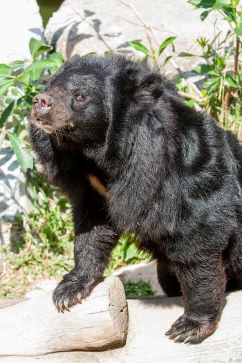 Animal Wildlife Animals In The Wild Mammal Nature One Animal Tree Wildlife