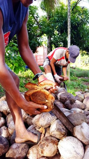 Coconutoilproduction Island Life Taveuni Island Work Melanesian Farmlife People Husking Coconuts Tropical
