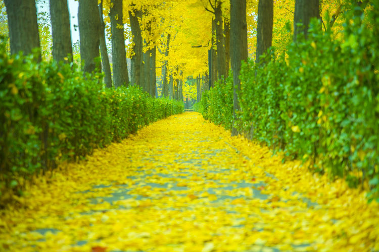 Yellow Tree Beauty In Nature Landscape Nature Green Color The Way Forward Springtime