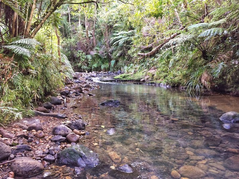 There is no path to peace. Peace is the path. Mahatma Gandhi, Creek Native Bush Tree Ferns Water Nature Beauty In Nature Tree No People Forest Growth Green New Zealand Scenery Going For A Walk Leisure Activity Fresh Water Fish