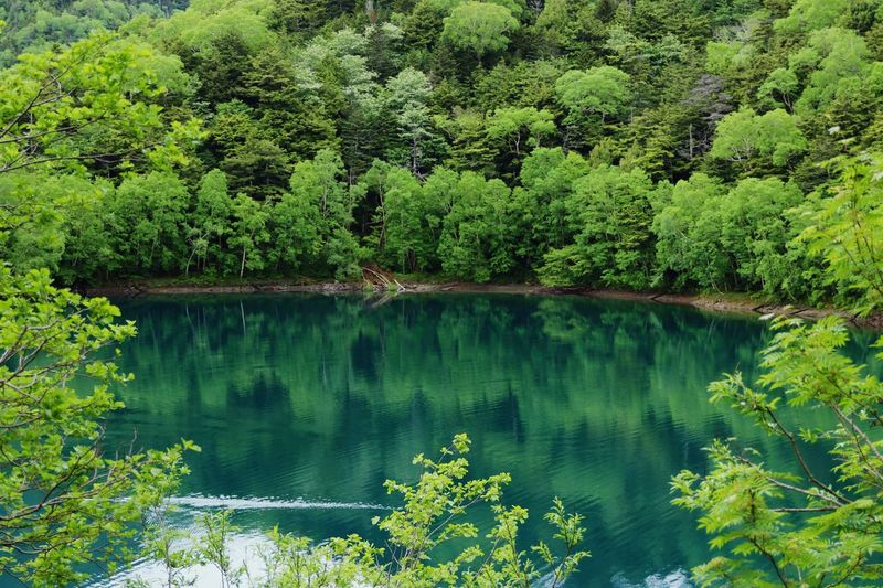 Green Green Green!  Green Nature Green Color Green Copy Space Japan Backgrounds Tree Plant Lake Water Green Color Tranquility Beauty In Nature Scenics - Nature Reflection Growth Tranquil Scene Nature Day No People Non-urban Scene Forest Idyllic Foliage Lush Foliage Coniferous Tree