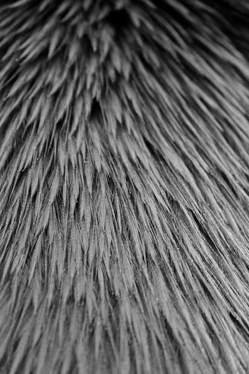 Feathers Atmosphere Australia Cassowary Feathers Lines Wing Abstract Background Backgrounds Bird Black And White Blackandwhite Close-up Contrast Day Full Frame Moody Nature No People Outdoors Shaft Texture Textured  Wallpaper