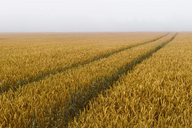 Field Foggy