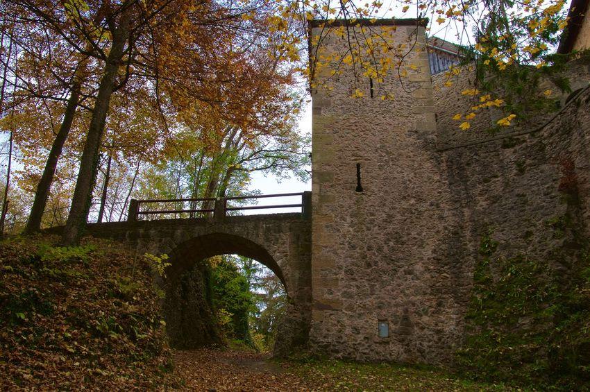 Burg Rabeneck during Autumn Autumn Autumn Colors Building Castel Castle Rabeneck Check This Out Hiking Landscape Nature Outdoors