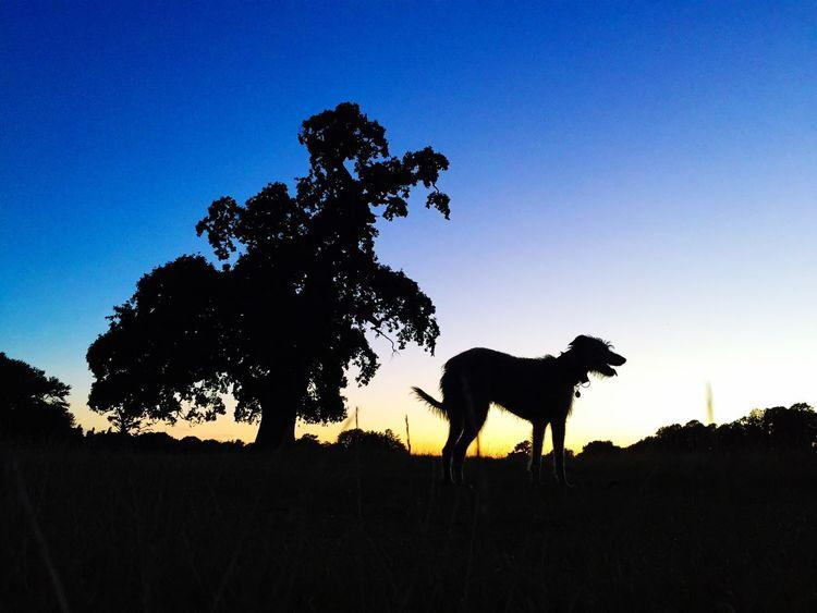 LEO... The One Eyed Lurcher... Lurcher Last Evening Sun Summer Dogs Animal Portrait I Love My Dog Animal Photography I Love My Dog ❤