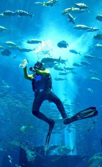 Underwater Exploration Adventure One Person Full Length Scuba Diving Diving Flipper Swimming Water Diving Equipment Atlantis The Palm Aquarium Fish Underwater Underwater Photography EyeEmNewHere Adapted To The City Done That. Modern Workplace Culture